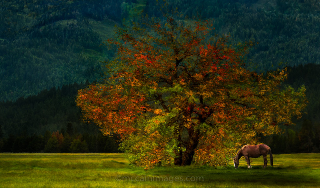 Under the Magic Tree