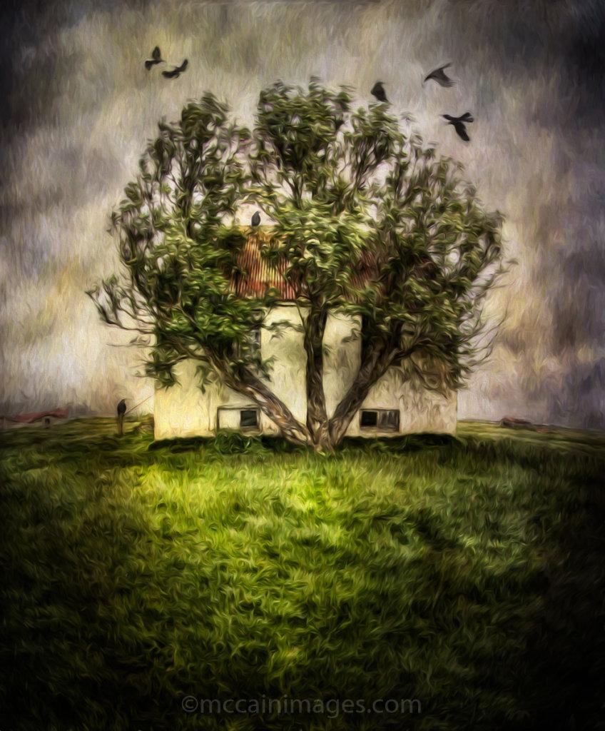 Raven Tree of Kilakot-Guru Award Winner 2015 Farm